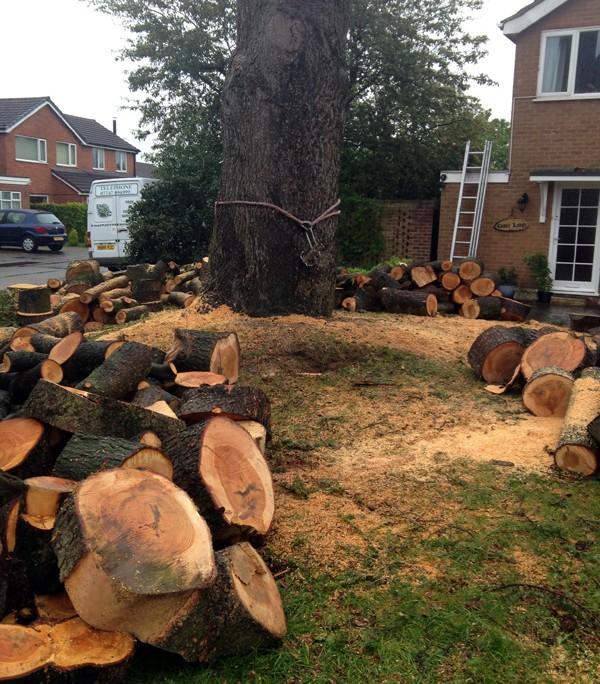 Cedar Tree Large Section Fell