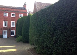 PJC Trees - Hedge Work