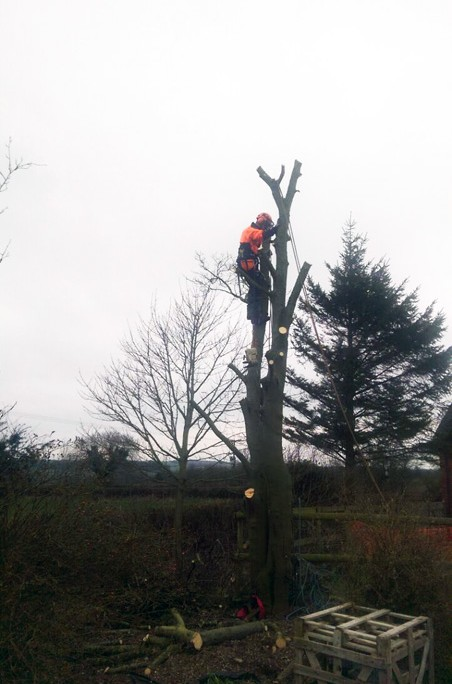 Tree Surgery - Small Section Fell